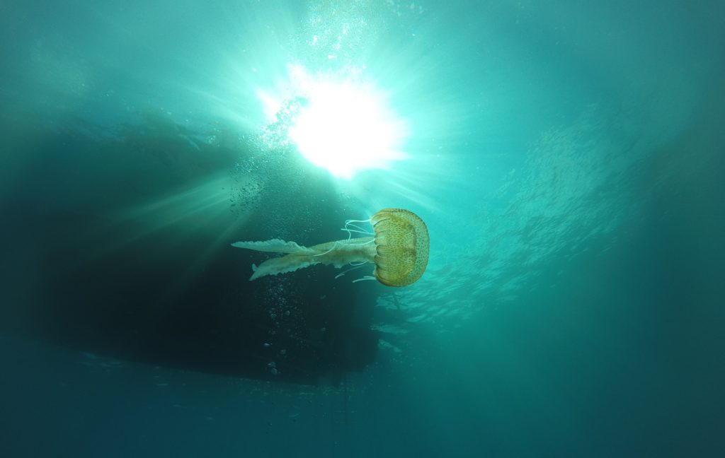 Auriel - Jellyfish