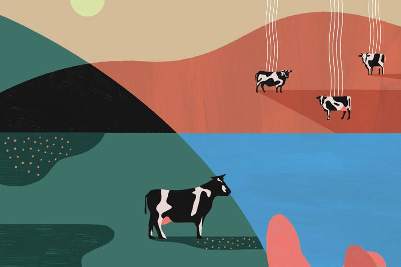 The race is on to hack cow burps and help save the planet