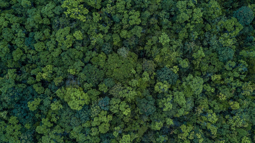 New research demonstrates reforestation benefits