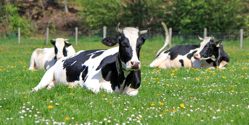 Mass spectrometry to be used to develop test for bovine mastitis and potentially reduce AMR