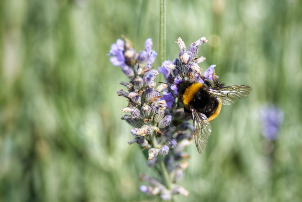 Aberdeen research creates a buzz among 'citizen scientists'