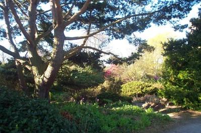 Cruickshank Botanic Garden Virtual Spring Walk